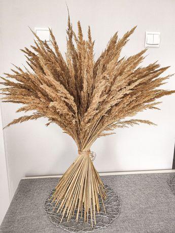 Trawa sucha pampasowa ozdobna