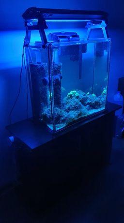 Akwarium morskie 108 L , sprzęt + życie