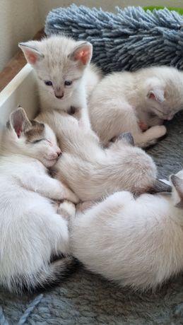 Doação   de gatos ,lindos