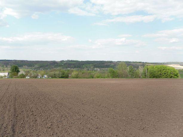 Продам пай сельхоз-назначения 2 гектара в Емильчинском раёне !