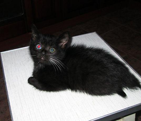 в питомнике новые котики!