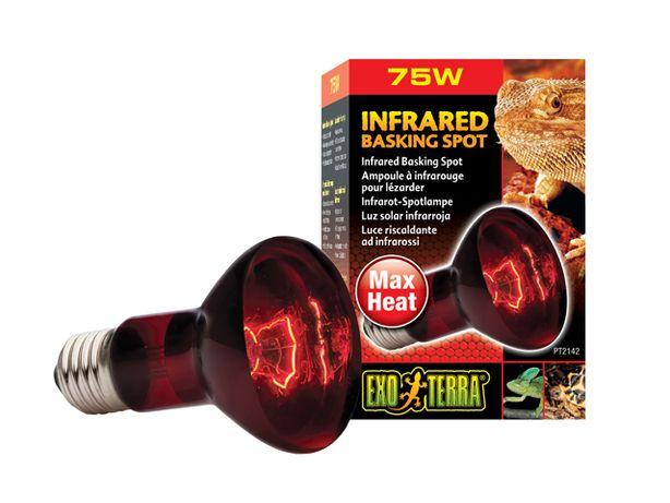 Żarówka Infrared Basking Spot 75W za 50% CENY