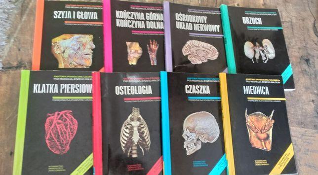 Anatomia Skawiny