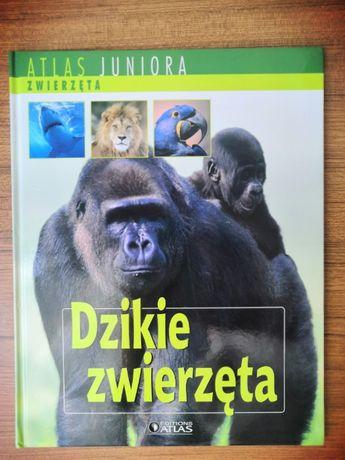Atlas Juniora Dzikie Zwierzęta |Darmowa Wysyłka|
