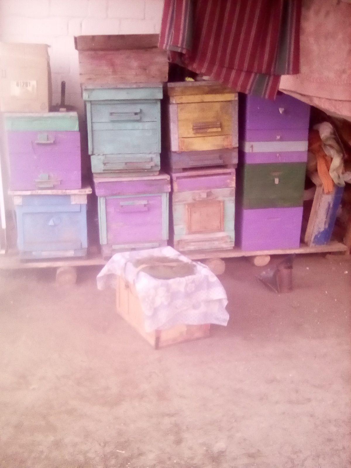 Продам ульи дадан и пчелосемьи на трёх сотой рамке
