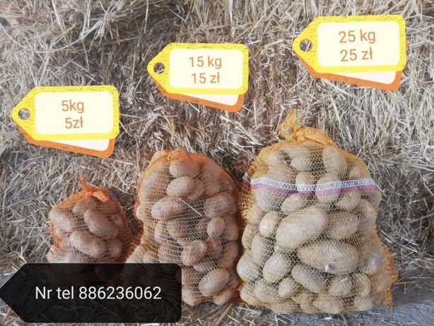 Chojnice ziemniaki pod drzwi w okolicach Chojnic, wysyłka cały kraj.