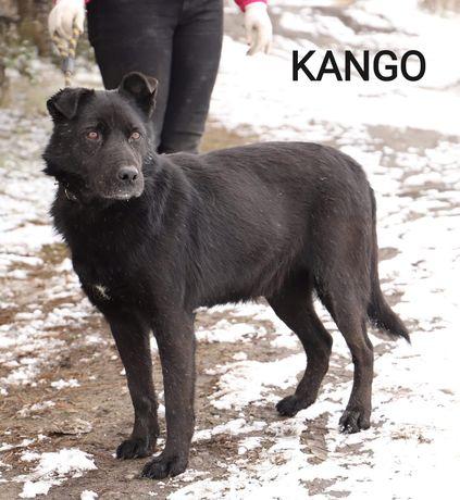 KANGO wesoły łagodny pies poleca się do adopcji