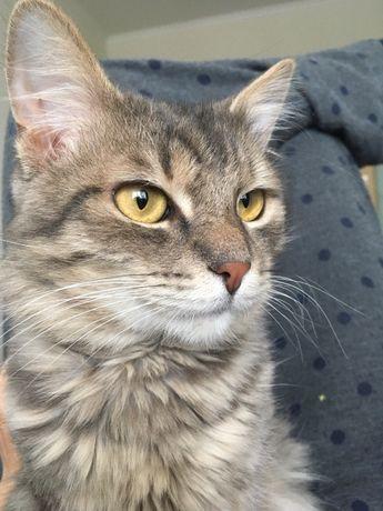 Знайдено кота, Деміївка