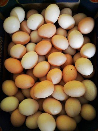Sprzedam jajka! Świeże  i zdrowe.