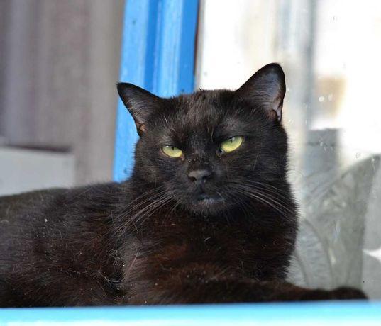 чорна плюшева кішечка жовтоока красуня 10м
