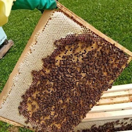 От маток с репродуктора. В 2021г. Пчеломатки. От Георга Маха. Карника