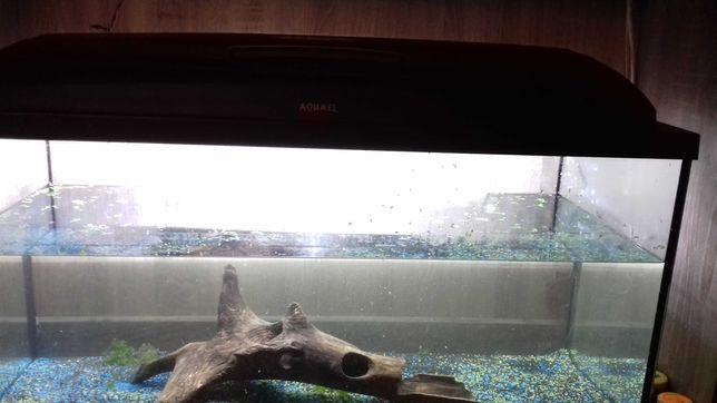 Akwarium aquael( możliwość zakupu z wyposażeniem)