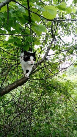 Zaginął czarno biały kot