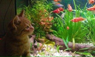 Rybki Gupiki młode zamiana na Helenki lub rośliny
