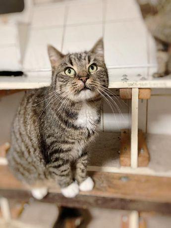 Duży, puchaty, kochany kocur Golec szuka chaty!