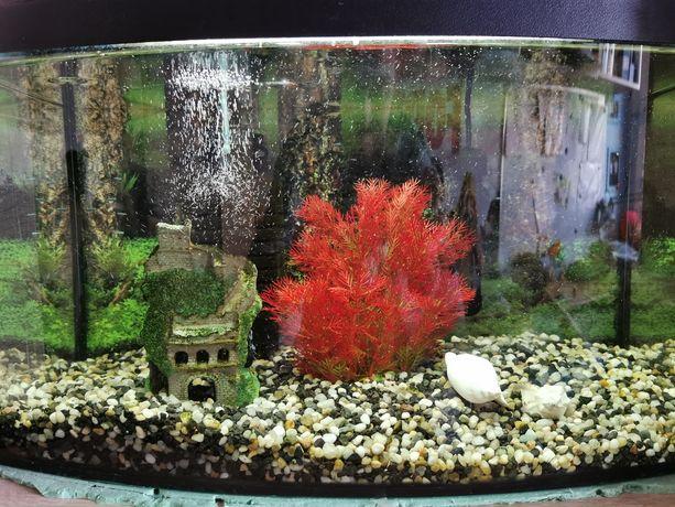 Akwarium z wyposażeniem 50L