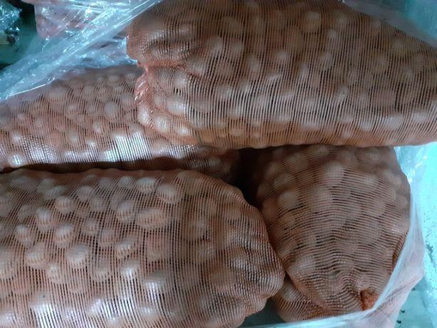 ziemniaki sadzonka VINETA