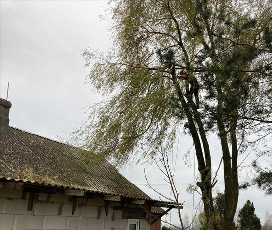 Wycinka i Pielęgnacja Drzew frezowanie, rębak ,podnosnik koszowy