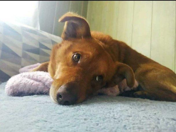 Super pies szuka dobrego domu.