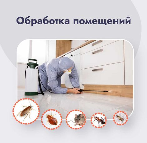 Уничтожение тараканов, блох, клопов, комаров, ос