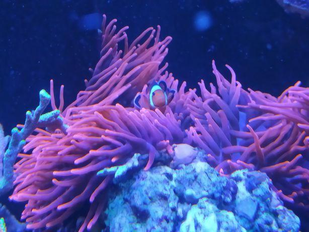 Akwarium morskie ukwiał