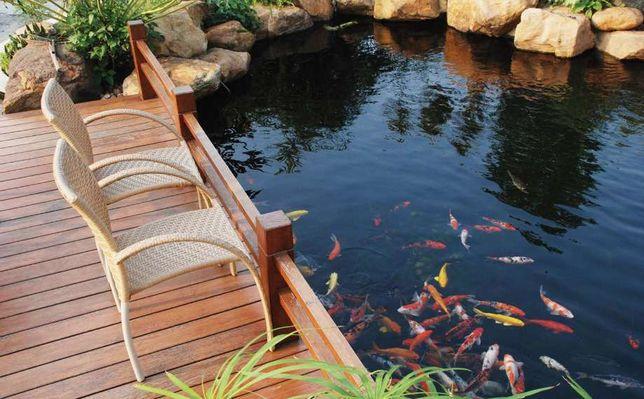 садовый водоем с карпами кои,питомник водных растений,немфии,магази
