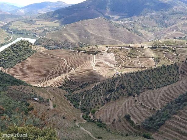 Terreno com 14800m2, Vista para Rio Douro