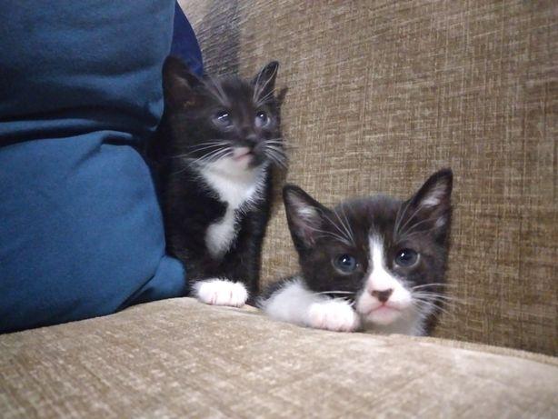 Adotem gatinho macho e fêmea