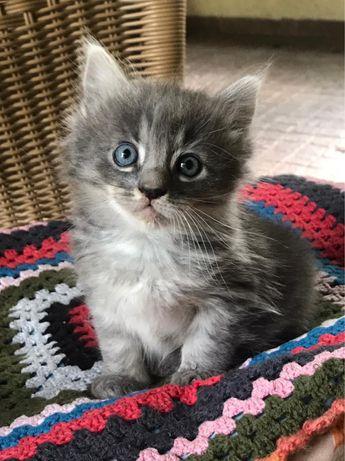 Отдам в хорошие руки ласковых котят бесплатно!!!
