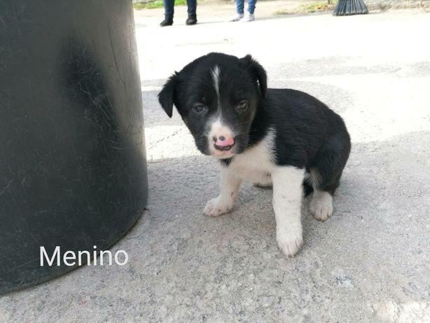 Cães bebés para adopção responsável