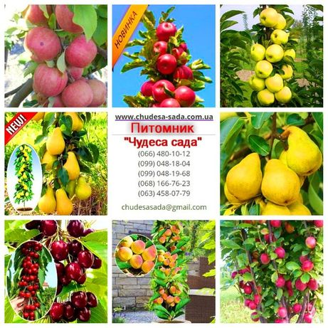 Колоновидные деревья слива, персик, груша, черешня, яблоня.вишни, абри