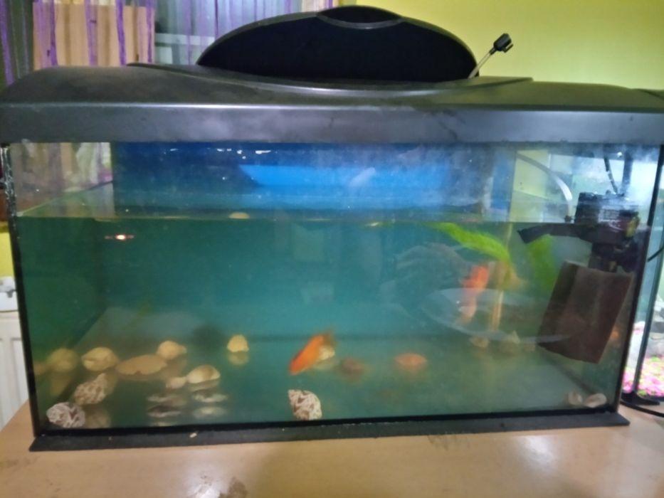Sprzedam akwarium Opatów - image 1