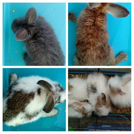 Малыши торчеухие кролики