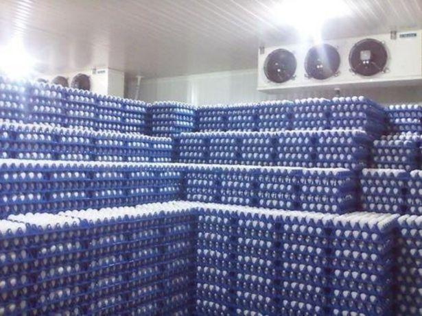 Холодильний агрегат для охолодження яєць, продуктів харчування