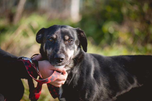 Tosiek , psi optymista szuka kochanego domu
