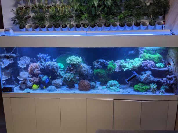 Żywa skała do akwarium morskiego