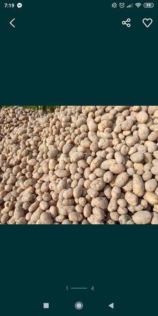 Ziemniaki jadalne Denar, hurt,detal, 5t