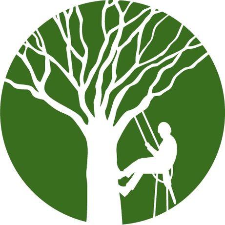 Arborysta - Alpinista wycinka/przycinka/pielęgnacja drzew.