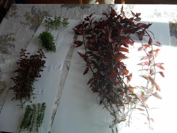 Sprzedam pakiety rośliny