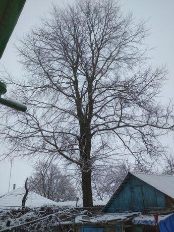 Дерево на дрова.