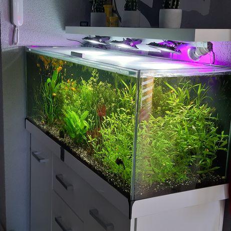 Zestaw akwarium 240 litrów  co2