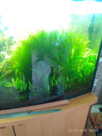 Мох аквариумный