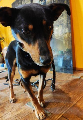 Znaleziono małego psiaka w Krastudach