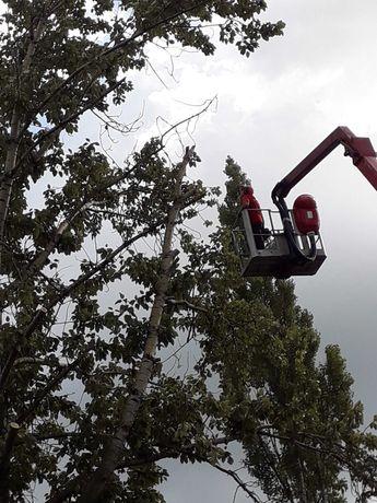 Wycinka drzew koronacja