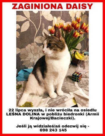 Zaginął kot, zaginiony kot