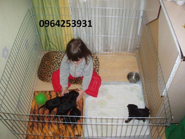 Загон, барьер, вольер, манеж, клетка для собак щенков котят 100х100х60