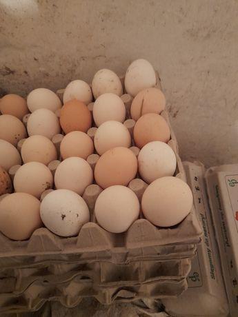 Jajka swojskie wolny wybieg