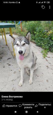 Пропала найдена собака Вольнянском районе