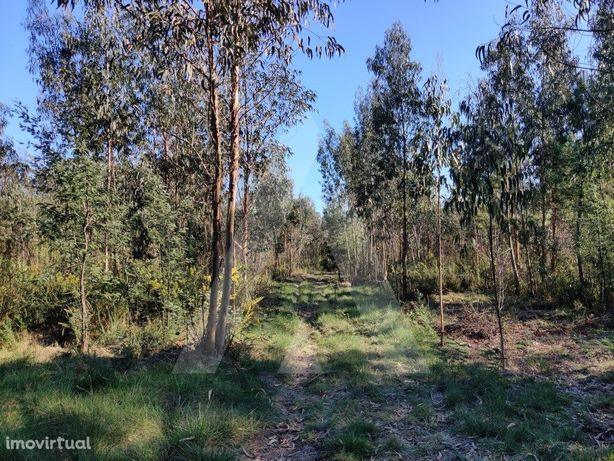 Terreno situado em Albergaria-a-Velha!