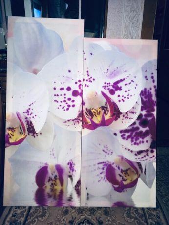Продам постер орхидея